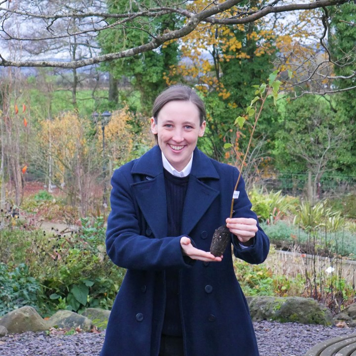Mhairi Black MP donates Silver Birch Tree